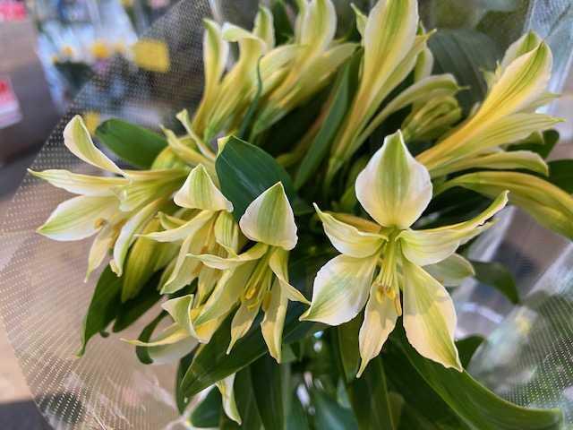 1月31日-2月2日 Weekend Flower