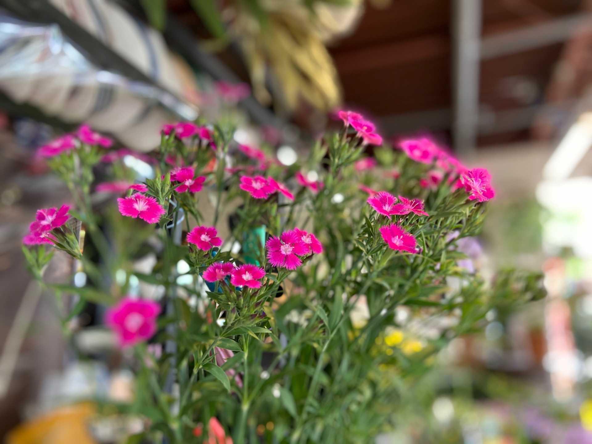 5月15日-5月17日 Weekend Flower