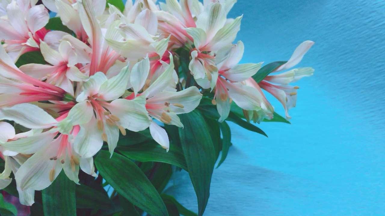 春のお花をご用意しております