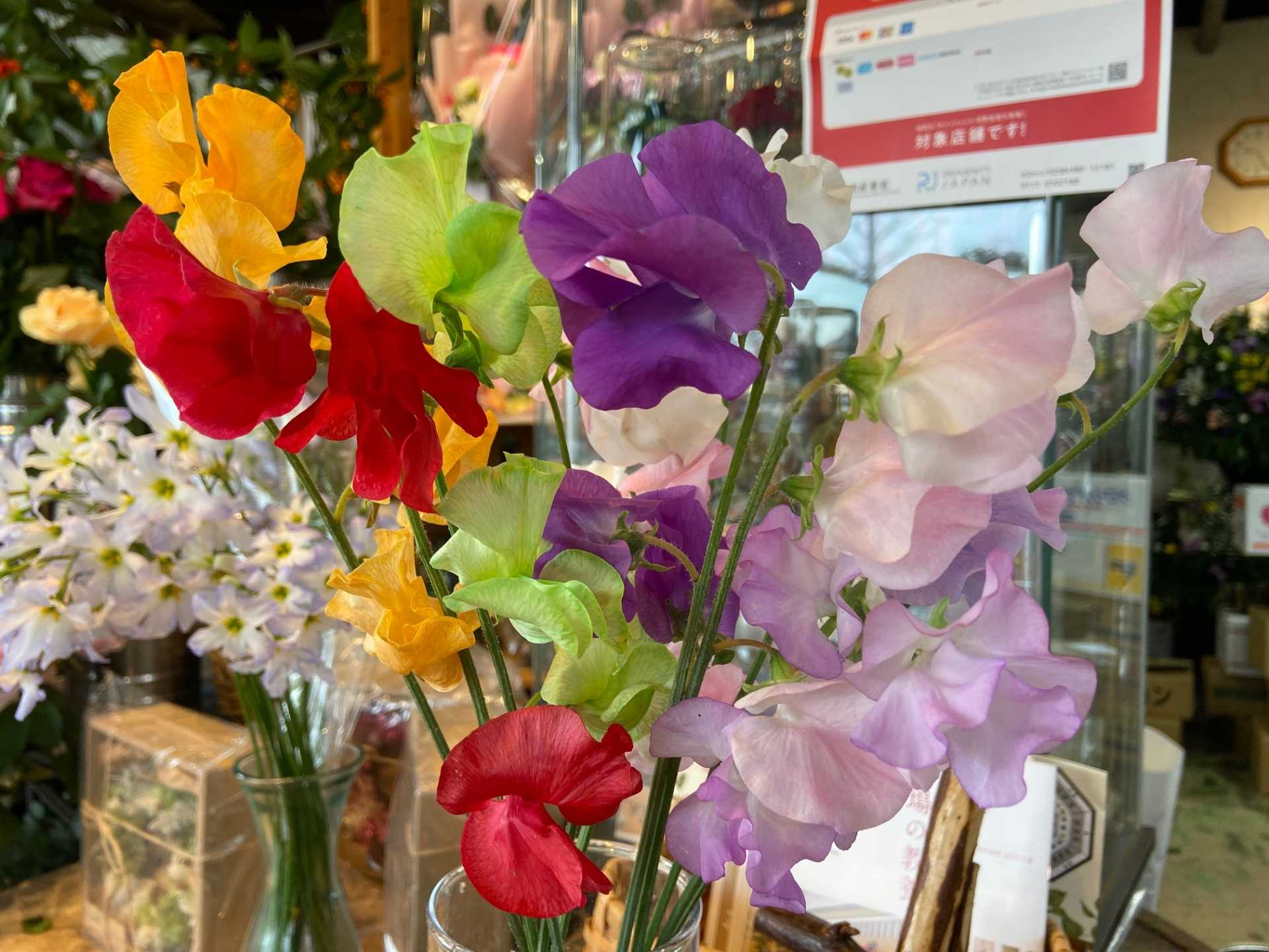 1月10日-1月12日 Weekend Flower